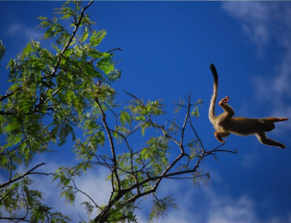 cuyabeno-wildlife