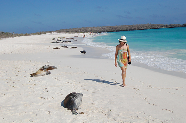galapagos sea lion encounter