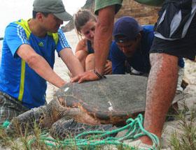 marine conservation volunteers