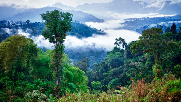 ecuador-cloudforest